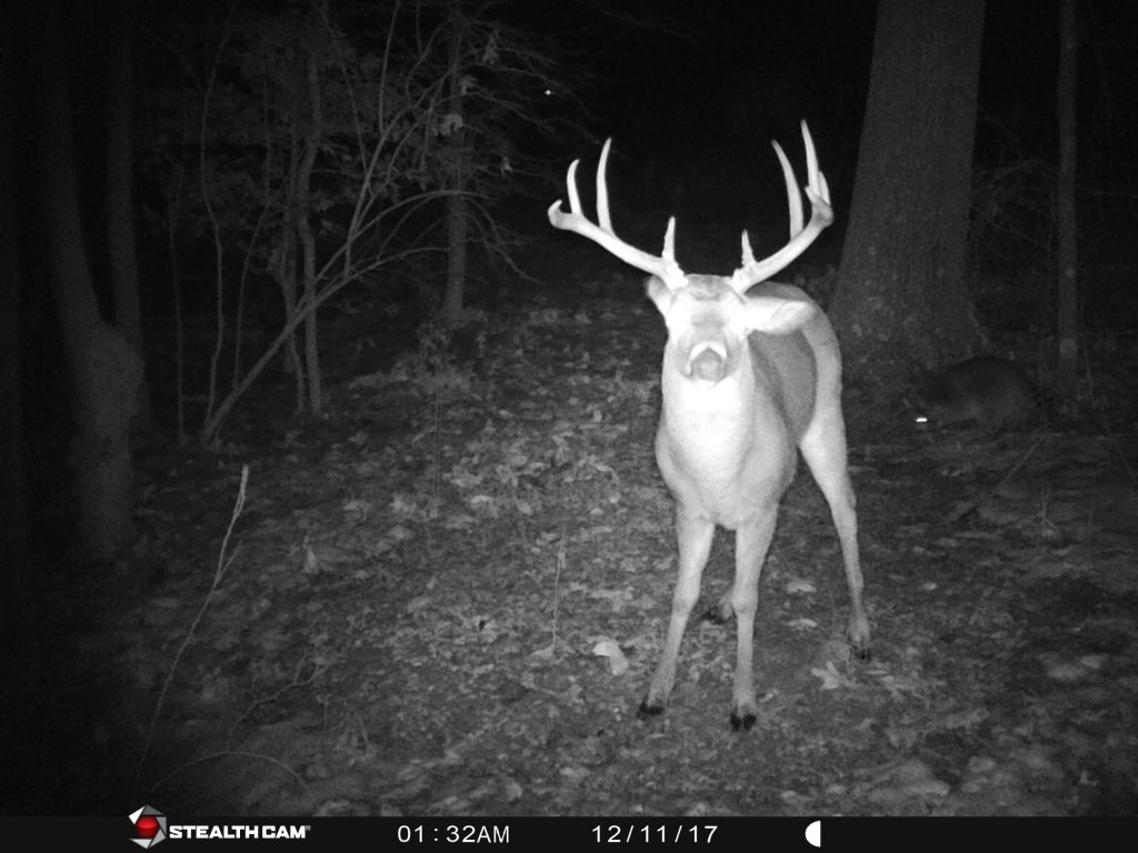 Buck with large antlers staring at the camera in night vision
