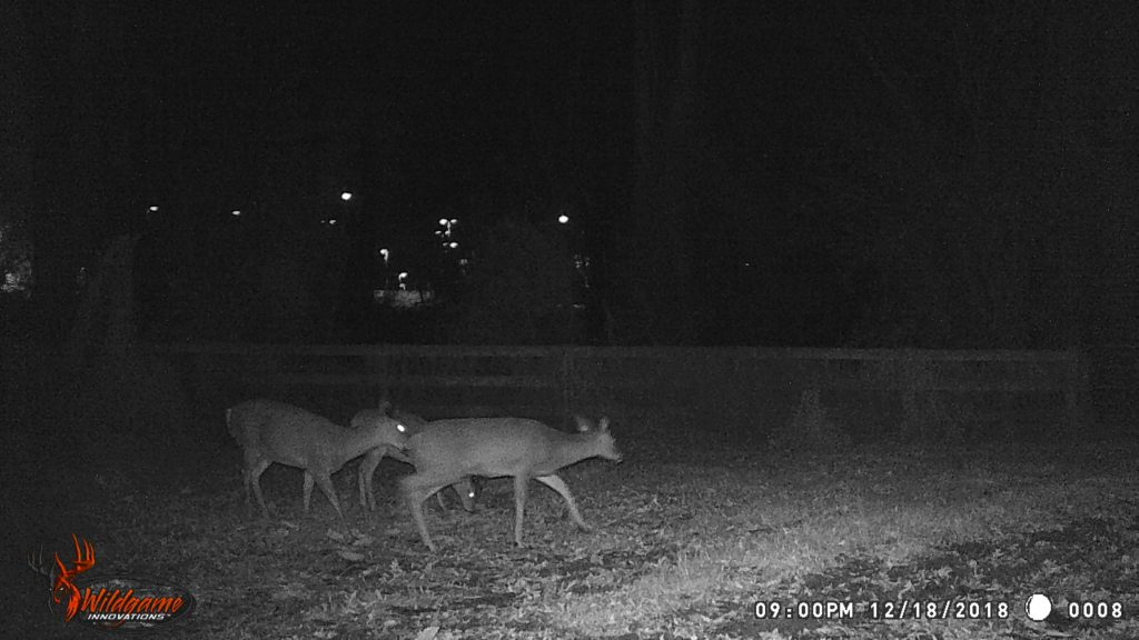 Doe walking through a field caught by a game camera